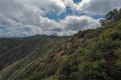 Photograph - Pinyon Hillside by TM Schultze