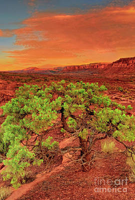 Photograph - Pinyon Pine Capitol Reef National Park Utah  by Dave Welling