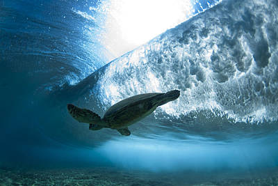 Hawaii Sea Turtle Photograph - Pipe Turtle Glide  -  Part 3 Of 3 by Sean Davey
