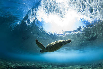 Ocean Turtle Photograph - Pipe Turtle Glide by Sean Davey