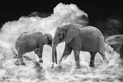 Elephant Photograph - Pipeline Dreams by Nichola Denny