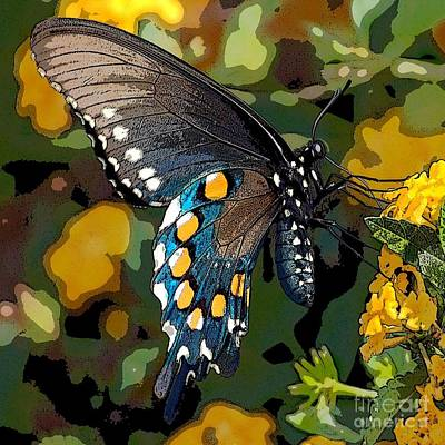 Pipevine Swallowtail Butterfly Art Print by David Smith