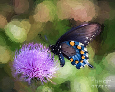 Pipevine Swallowtail Butterfly Photograph - Pipevine Swallowtail Butterfly by Kerri Farley