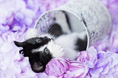 Photograph - Pippa Purple Floral  H by Kelly Richardson