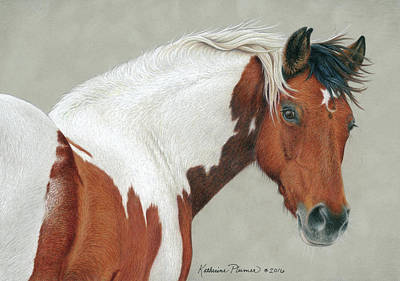 Pinto Drawing - Pippin by Katherine Plumer