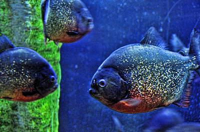 Art Print featuring the photograph Piranha Blue by Jan Amiss Photography