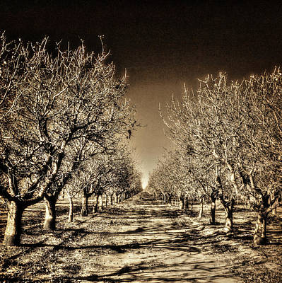 Photograph - Pistachio Trees Winter by Roger Passman