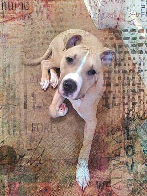 Becky Photograph - Pit Bull's Expressions by Becky Burt