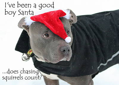Pitbull Photograph - Pit Bull Christmas Two by Sue Long