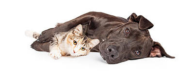 Dog Collage Photograph - Pit Bull Dog And Kitten Cuddling by Susan Schmitz