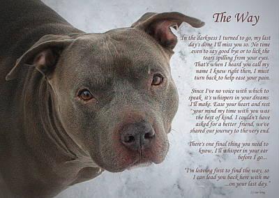 Dog Portraits From Photograph - Pit Bull  The Way by Sue Long