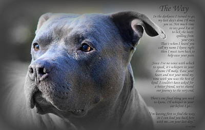Dog Portraits From Photograph - Pit Bull The Way Version Two by Sue Long