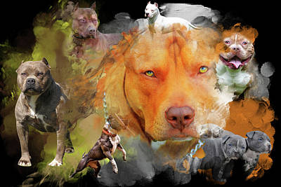 Digital Art - Pitbull Love by Davina Washington