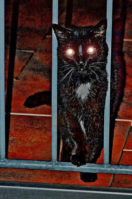 Pitch Darkness. Flash. Cat. Original by Andy Za