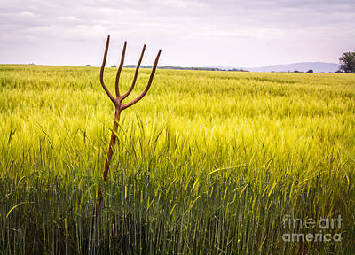 Pitch Forks Photograph - Pitch Fork In Wheat Field by Amanda Elwell