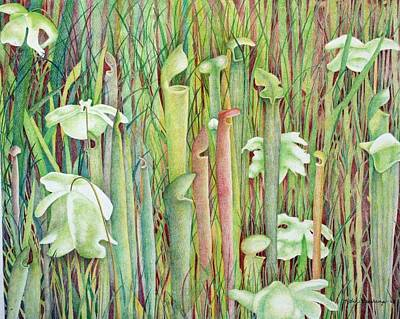 South Louisiana Drawing - Pitcher Plant Bog by Robin Veerkamp