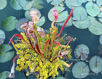 Photograph - Pitcher Plants And Lily Pads By Kaye Menner by Kaye Menner
