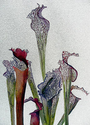Ohio Painting - Pitchers Plant by Mindy Newman