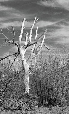 Photograph - Pitchfork Tree by Brent Dolliver