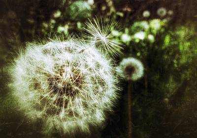 Photograph - Pixie Dust by Yoursbyshores Isabella Shores
