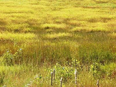 Photograph - Plains At The Bosque by Joseph Frank Baraba