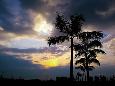 Photograph - Plan Trees And Moody Sky by Atullya N Srivastava