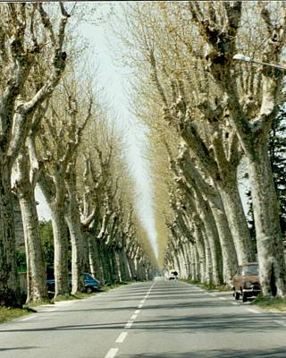 Photograph - Planetrees Outside Saint Remy De Provence by Christopher Kirby