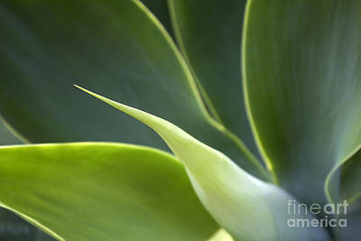Photograph - Plant Abstract by Tony Cordoza