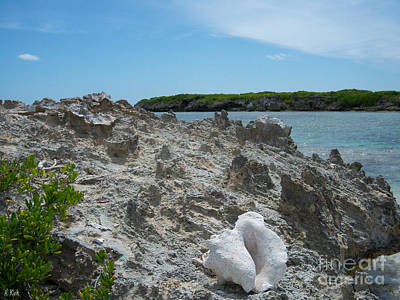 Abstract Airplane Art - Plant and Shell on a Dominican Shore by Heather Kirk