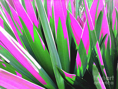 Photograph - Plant Burst - Pink by Rebecca Harman