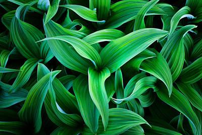 Plant Chaos Print by Darren  White
