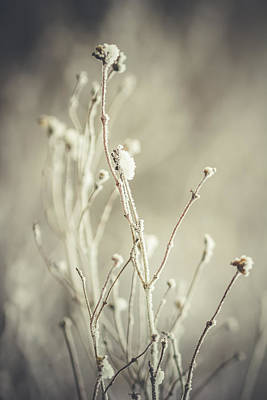 Photograph - Plant by Cindy Grundsten