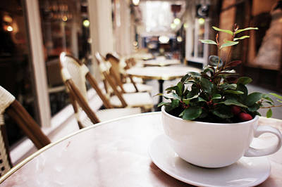 Photograph - Plant In A Cup In A Cafe by Trance Blackman