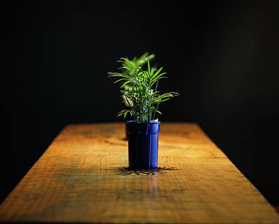 Photograph - Plant In Toy Bucket by Hyuntae Kim