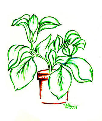 House Plant Drawing - Plant by Judith Herbert