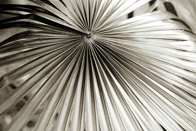 Photograph - Plant Lines by Marilyn Hunt