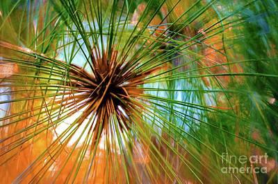 Photograph - Tropics - Hawaii Plant by D Davila