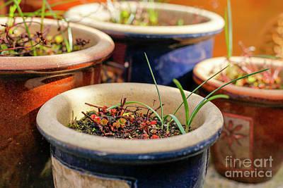 Photograph - Plant Pots by Jim Orr