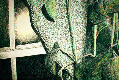 Houseplants Drawing - Plant Room by Heidi Douhab