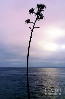 Art Print featuring the photograph Plant Silhouette Over Ocean by Mariola Bitner