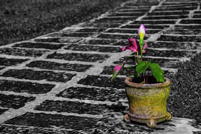 Photograph - Plant by Stuart Manning