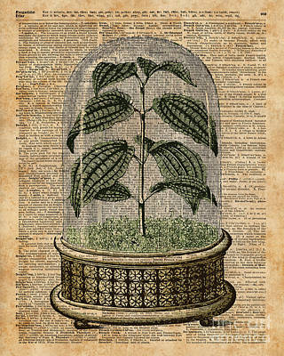 Invitation Card Mixed Media - Plant Under Bell-glass Vintage Illustration Over A Old Dictionary Page  by Jacob Kuch