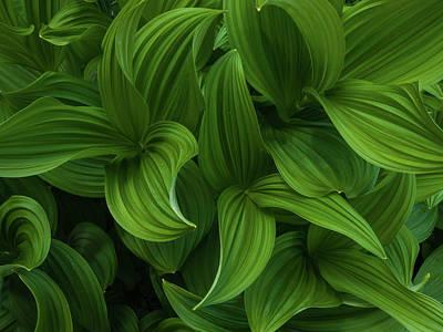 Photograph - Plant by Walt Sterneman