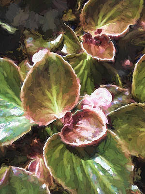 Painting - Plant With Pink Buds by Cathy Jourdan