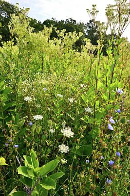 Photograph - Plantain-a-plenty At Marengo Ridge by Ray Mathis