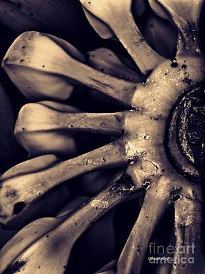 Photograph - Plantains 2  Sepia by Sarah Loft