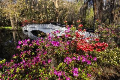 Photograph - Plantation Azalea Bridge by Ken Barrett