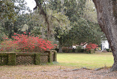 Photograph - Plantation Garden by Linda Brown