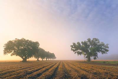 Plantation Photograph - Plantation Oaks 2 by Chris Moore