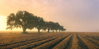 Photograph - Plantation Oaks 3 by Chris Moore
